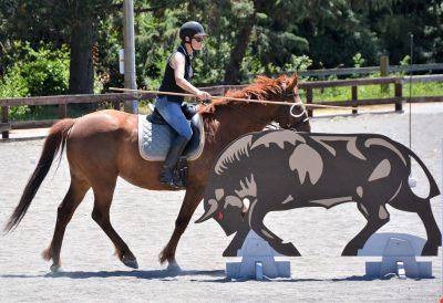 Working equitation bull
