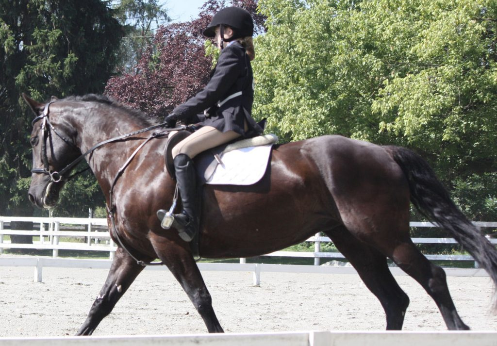 A quiet, upright seat will help your horse balance through turns