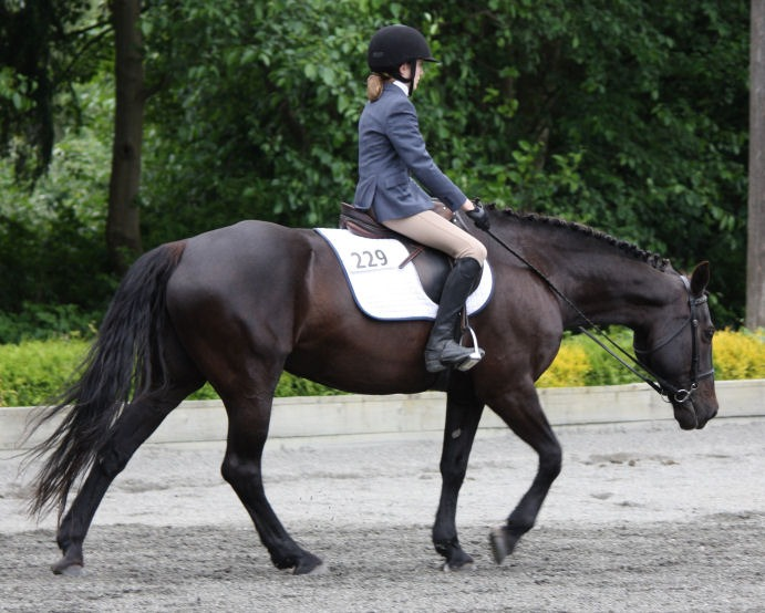Many dressage tests call for a free walk on a long rein
